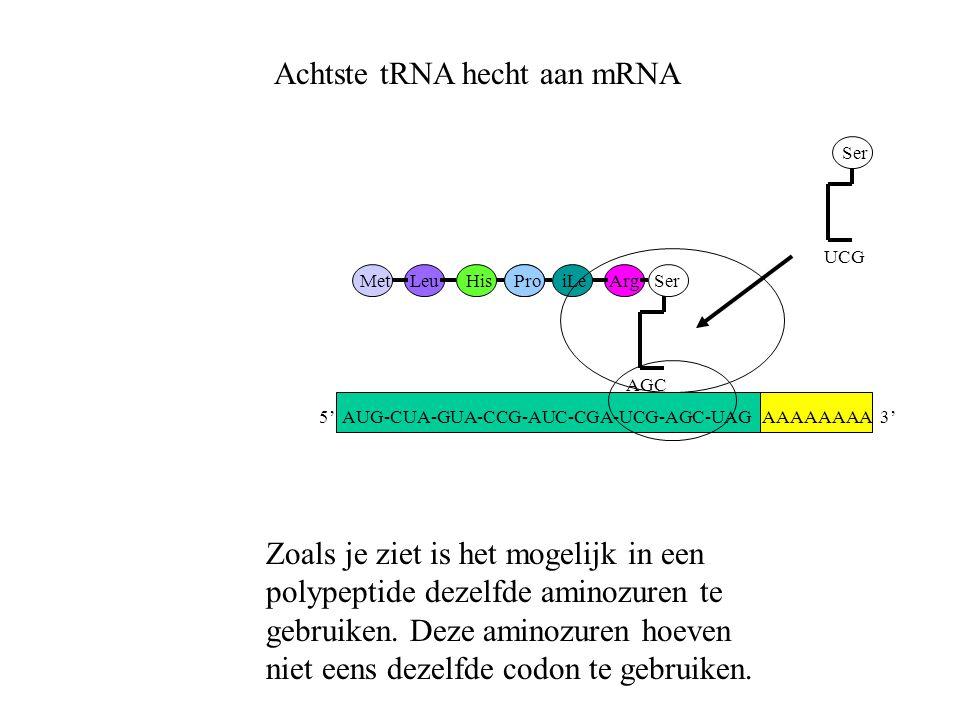 AAAAAAAA 3' MetLeuHisProiLeArg AGC Ser UCG Ser Achtste tRNA hecht aan mRNA Zoals je ziet is het mogelijk in een polypeptide dezelfde aminozuren te geb