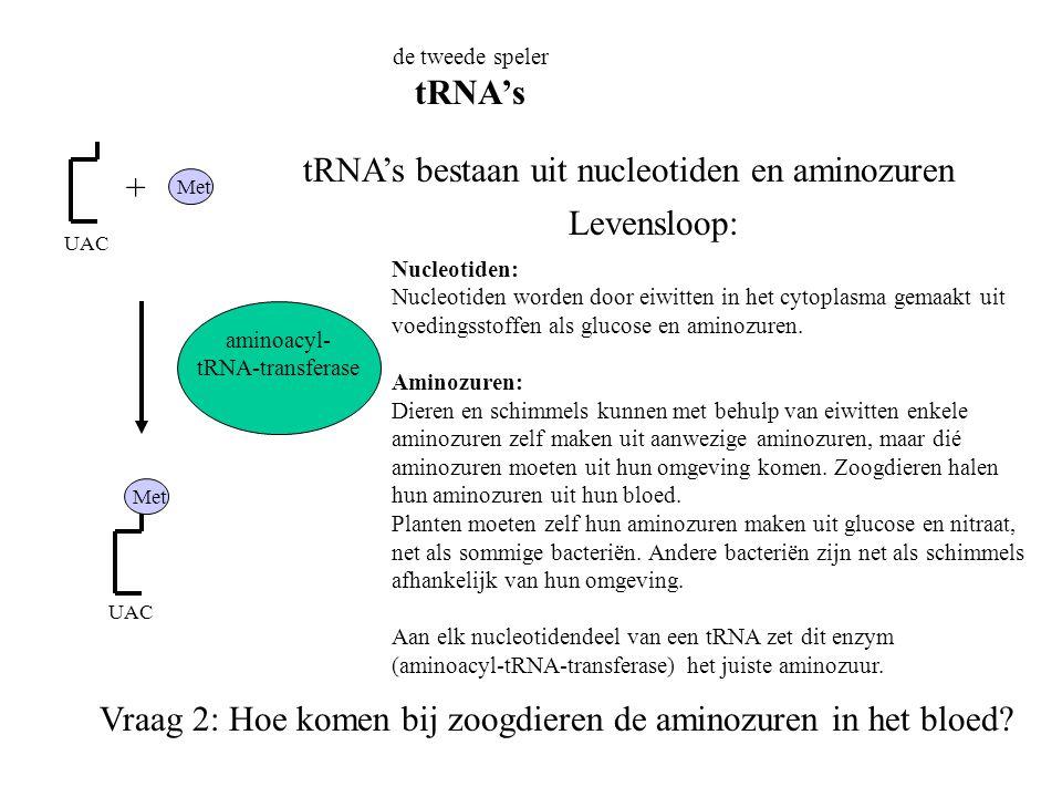 de tweede speler tRNA's UAC Met UAC tRNA's bestaan uit nucleotiden en aminozuren Levensloop: Nucleotiden: Nucleotiden worden door eiwitten in het cyto