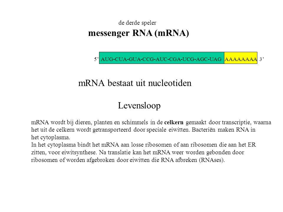 de derde speler messenger RNA (mRNA) AAAAAAAA 3' mRNA bestaat uit nucleotiden Levensloop mRNA wordt bij dieren, planten en schimmels in de celkern gem