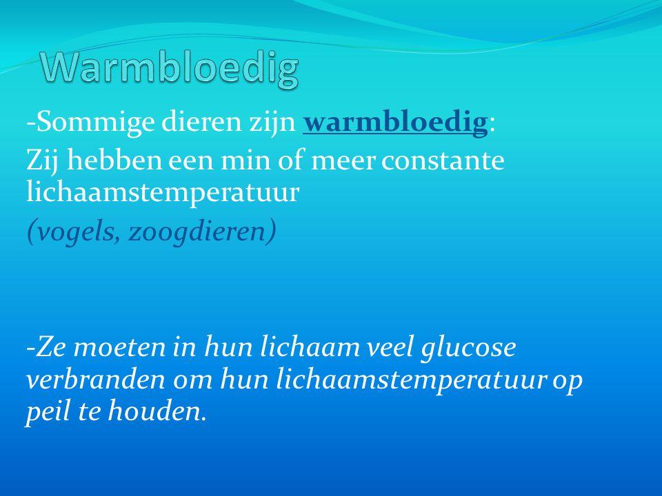 -Sommige dieren zijn warmbloedig: Zij hebben een min of meer constante lichaamstemperatuur (vogels, zoogdieren) -Ze moeten in hun lichaam veel glucose verbranden om hun lichaamstemperatuur op peil te houden.