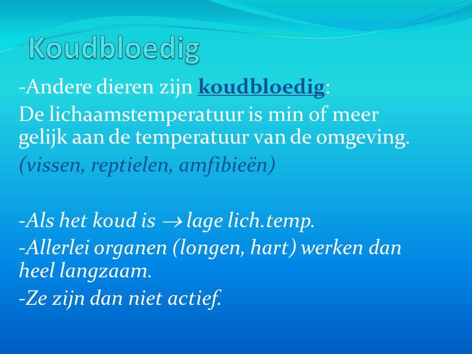 -Andere dieren zijn koudbloedig: De lichaamstemperatuur is min of meer gelijk aan de temperatuur van de omgeving. (vissen, reptielen, amfibieën) -Als