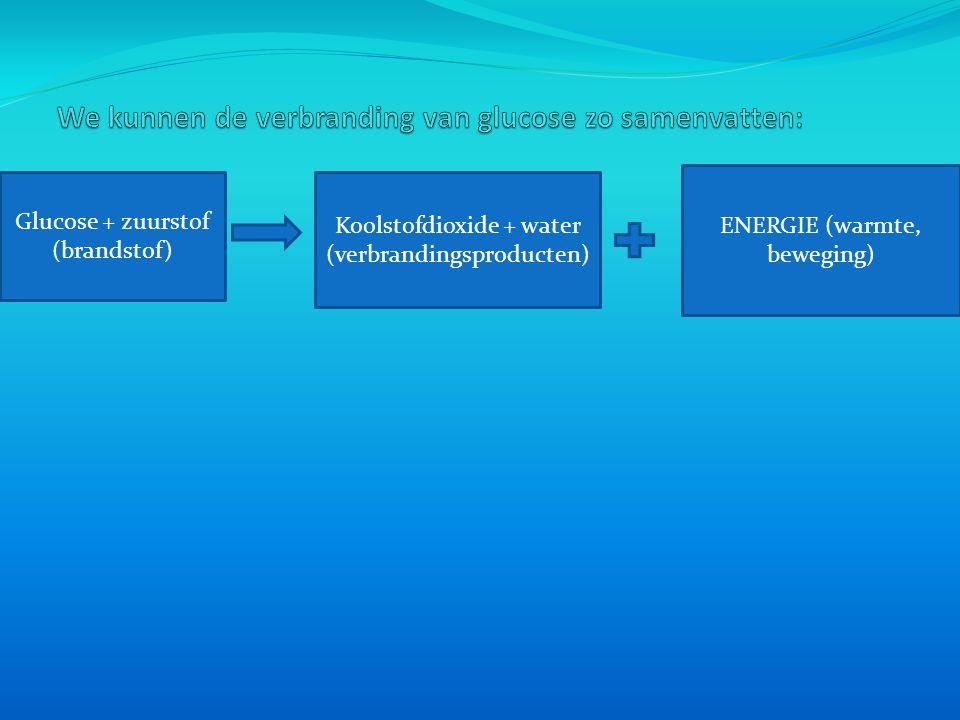 Glucose + zuurstof (brandstof) Koolstofdioxide + water (verbrandingsproducten) ENERGIE (warmte, beweging)