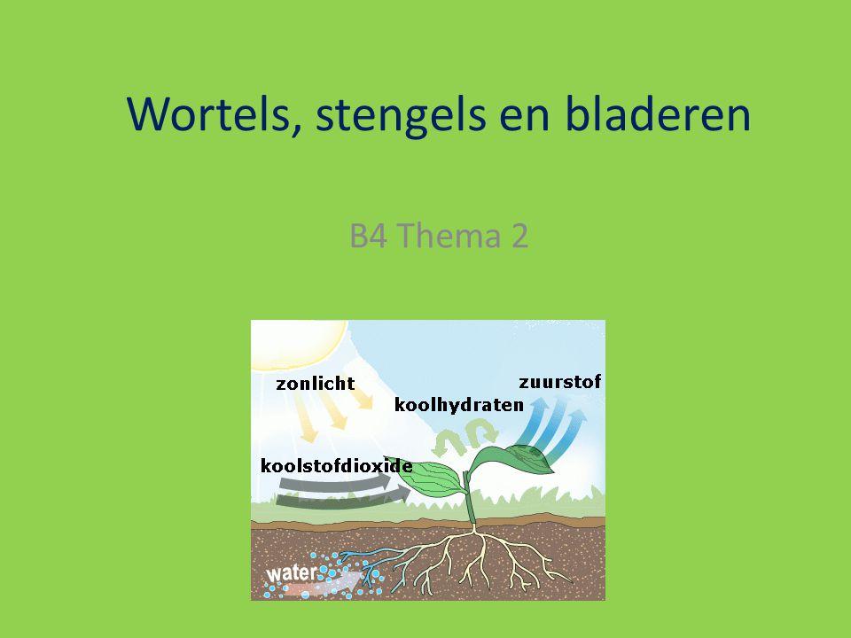 Wortels, stengels en bladeren B4 Thema 2