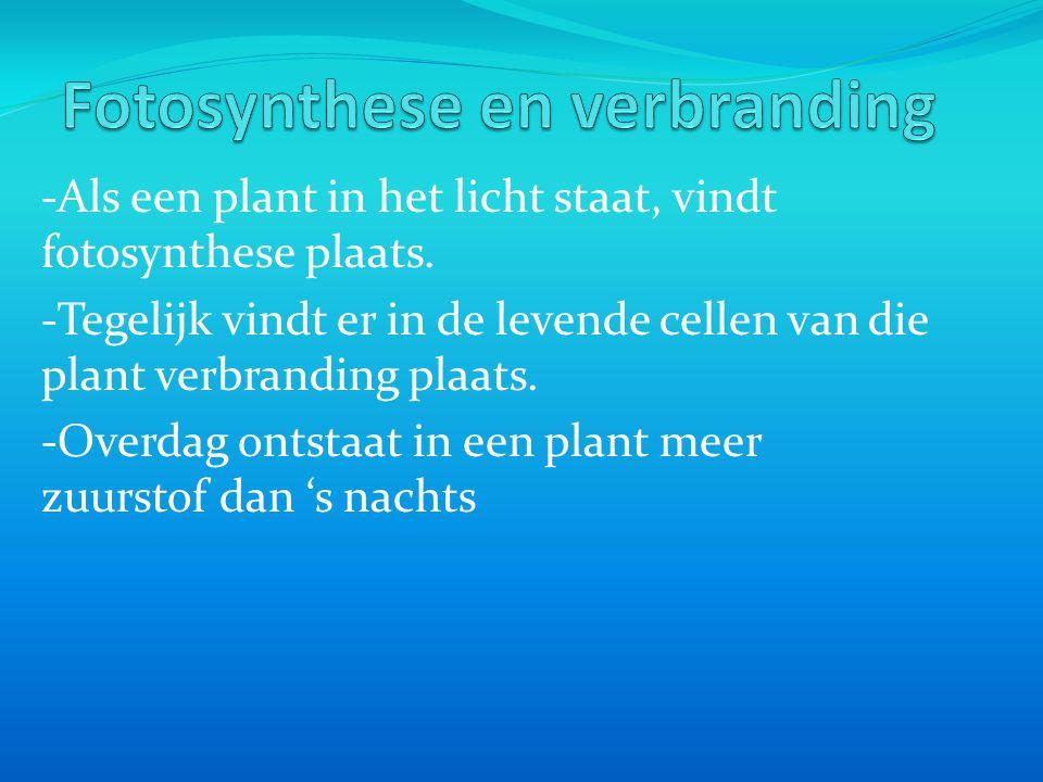 -Als een plant in het licht staat, vindt fotosynthese plaats.
