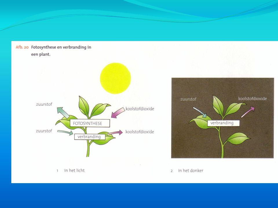 -Nogmaals een filmpje over fotosynthese: http://www.schooltv.nl/beeldbank/clip/2 0100402_fotosynthese01 http://www.schooltv.nl/beeldbank/clip/2 0100402_fotosynthese01