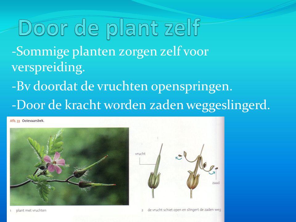 -Sommige planten zorgen zelf voor verspreiding.-Bv doordat de vruchten openspringen.