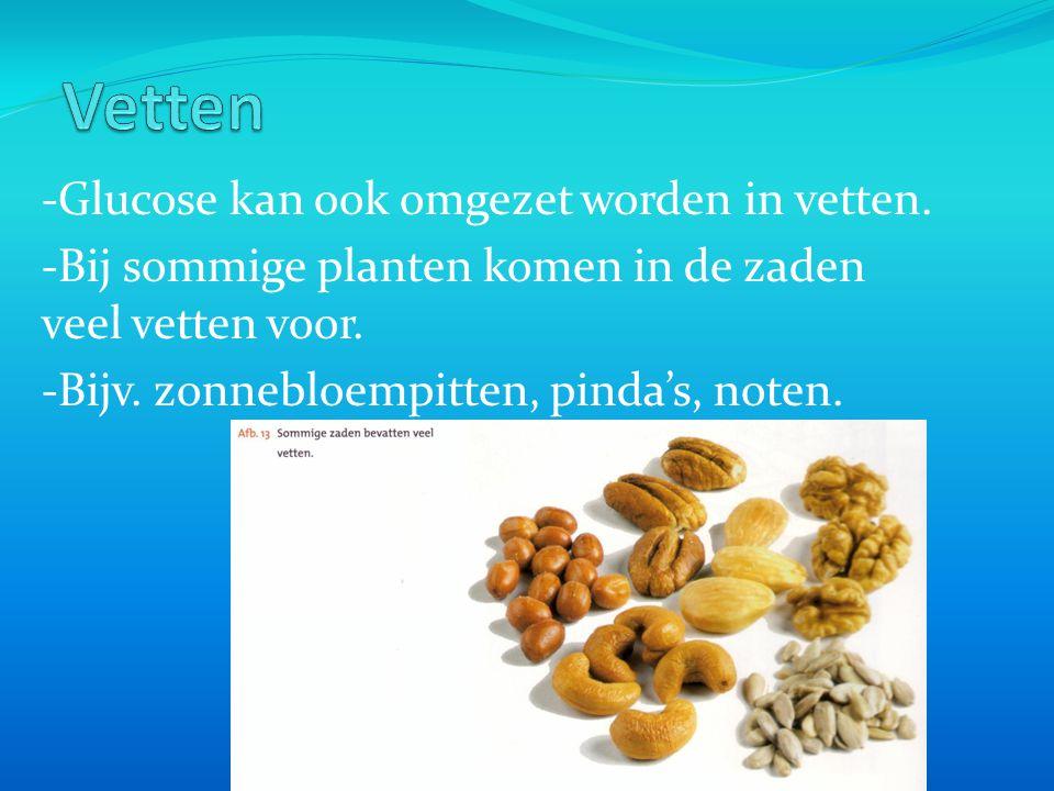 -Glucose kan ook omgezet worden in vetten.-Bij sommige planten komen in de zaden veel vetten voor.