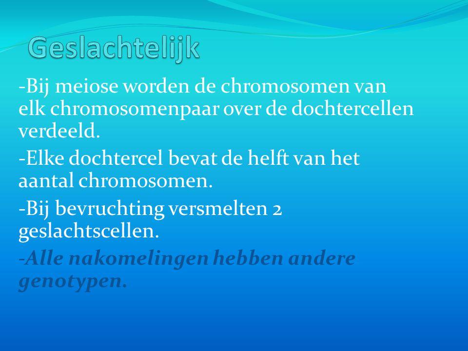 -Bij meiose worden de chromosomen van elk chromosomenpaar over de dochtercellen verdeeld. -Elke dochtercel bevat de helft van het aantal chromosomen.