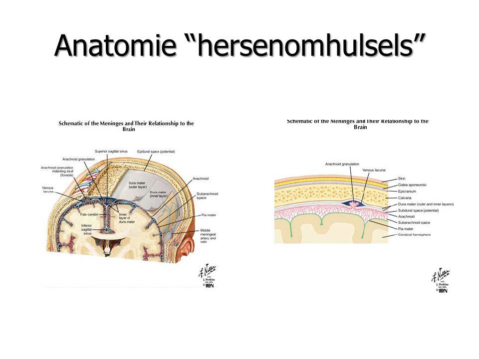 "Anatomie ""hersenomhulsels"""
