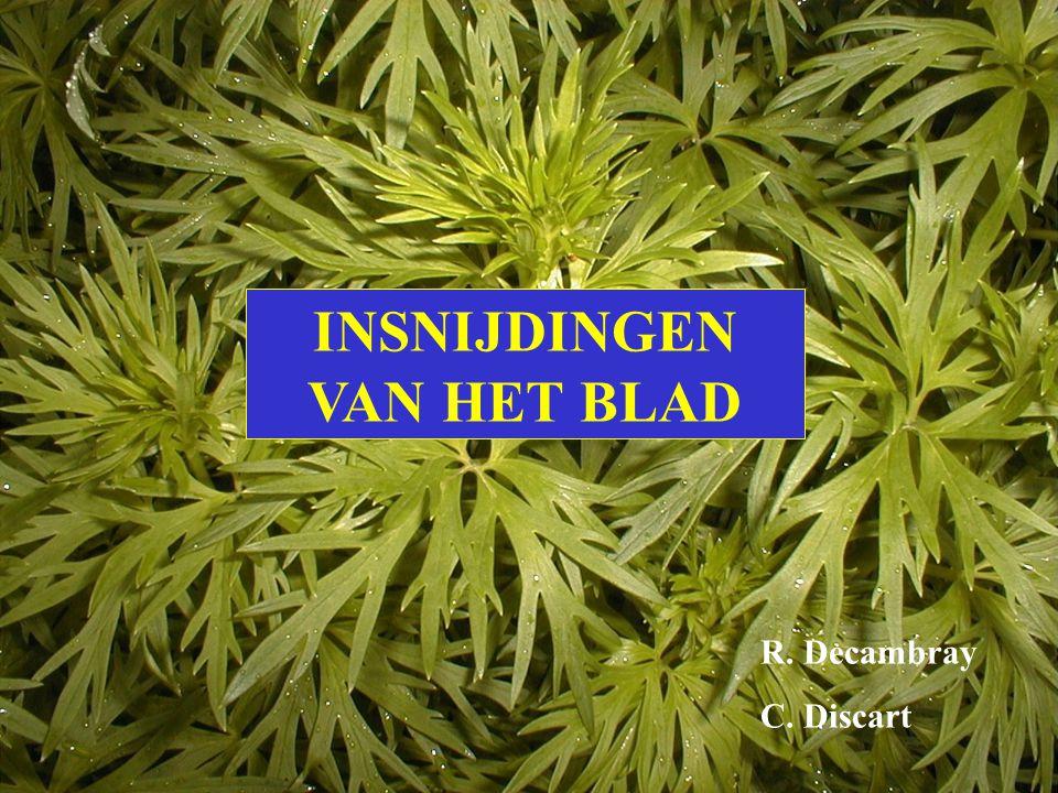 Veerlobbig Handdelig Veerspletig Handspletig Dit blad is: Klik het goede antwoord aan.