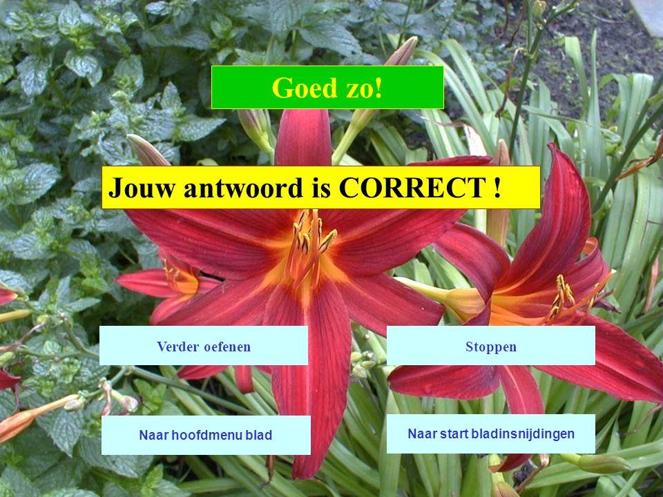 Jouw antwoord is CORRECT ! Goed zo! Verder oefenen Naar start bladinsnijdingen Stoppen Naar hoofdmenu blad