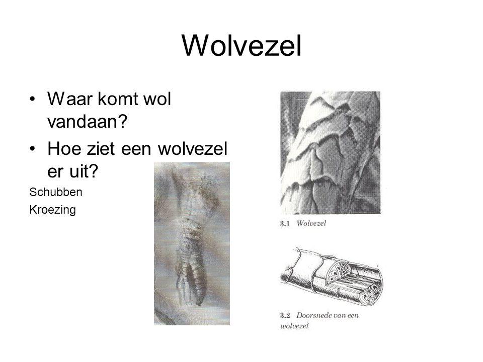 Wolvezel Waar komt wol vandaan? Hoe ziet een wolvezel er uit? Schubben Kroezing
