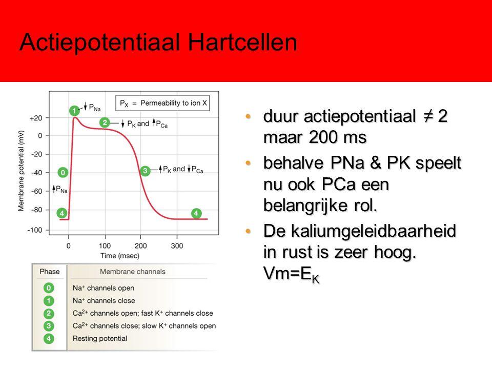 Actiepotentiaal Hartcellen duur actiepotentiaal ≠ 2 maar 200 ms duur actiepotentiaal ≠ 2 maar 200 ms behalve PNa & PK speelt nu ook PCa een belangrijk