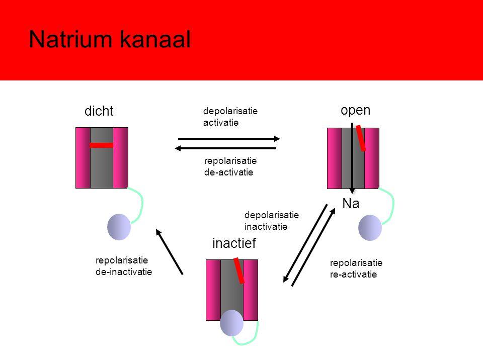 Natrium kanaal dicht inactief repolarisatie de-inactivatie depolarisatie activatie repolarisatie de-activatie depolarisatie inactivatie repolarisatie