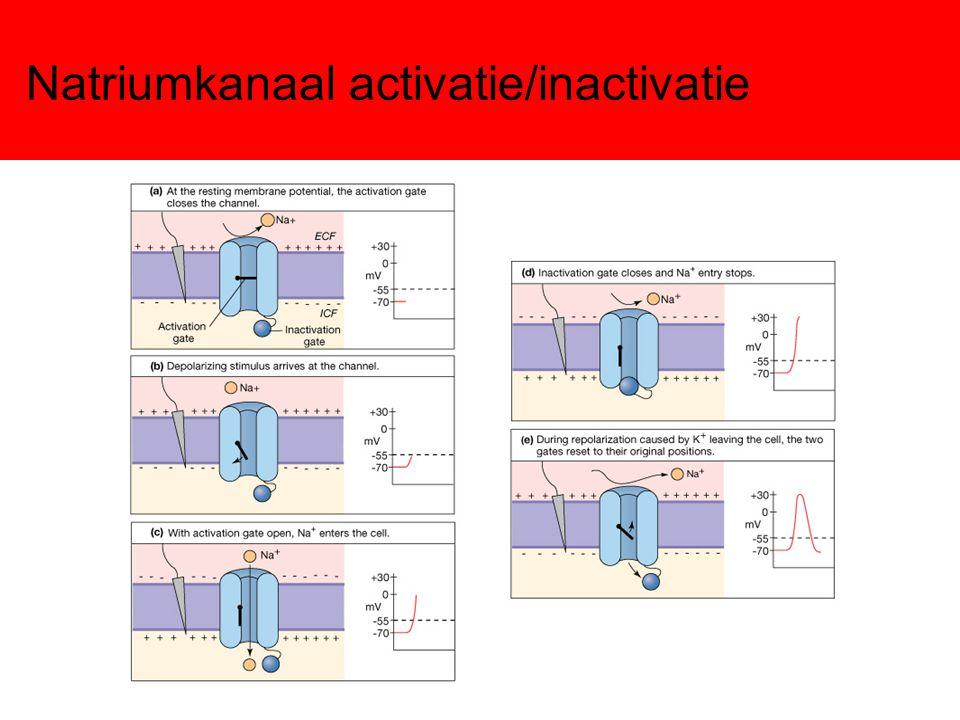 Natriumkanaal activatie/inactivatie