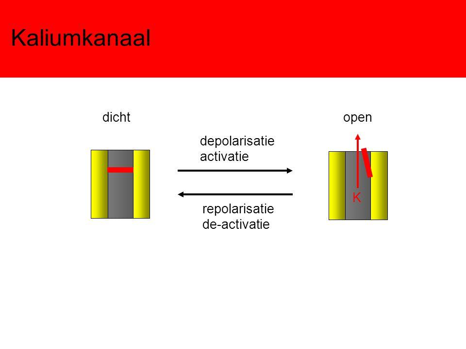Kaliumkanaal depolarisatie activatie repolarisatie de-activatie dicht K open