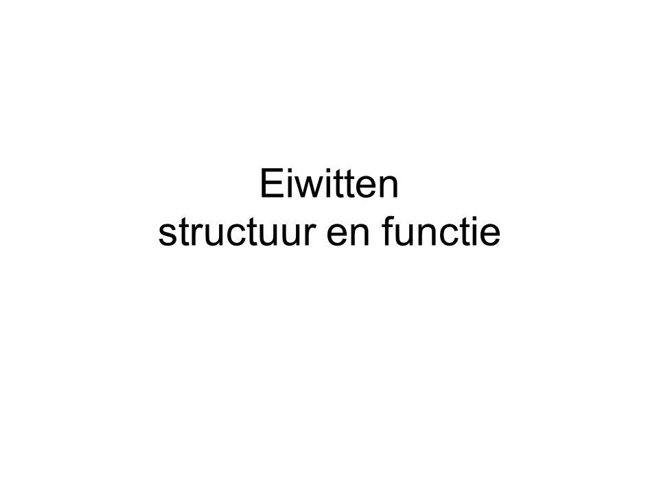 Eiwitten structuur en functie