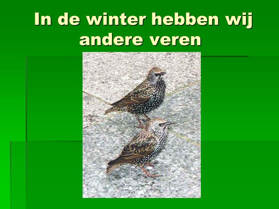 In de winter hebben wij andere veren In de winter hebben wij andere veren