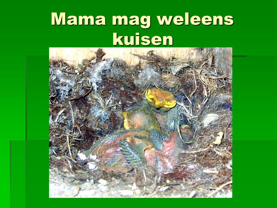 Mama mag weleens kuisen Mama mag weleens kuisen