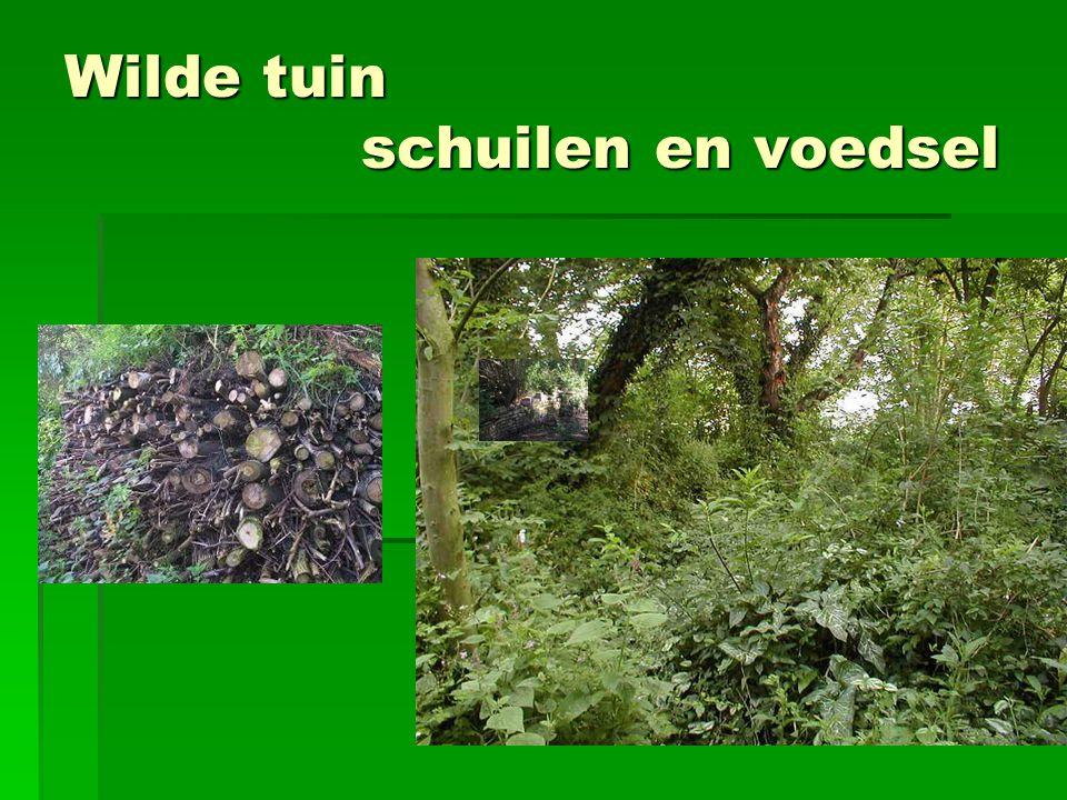 Wilde tuin schuilen en voedsel