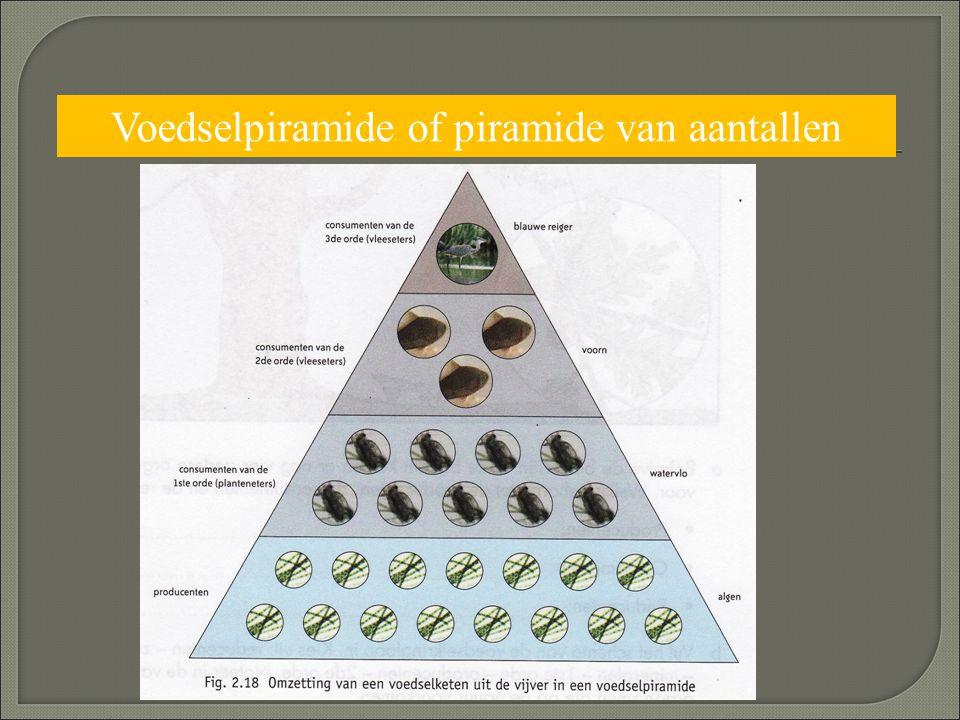 Voedselpiramide of piramide van aantallen