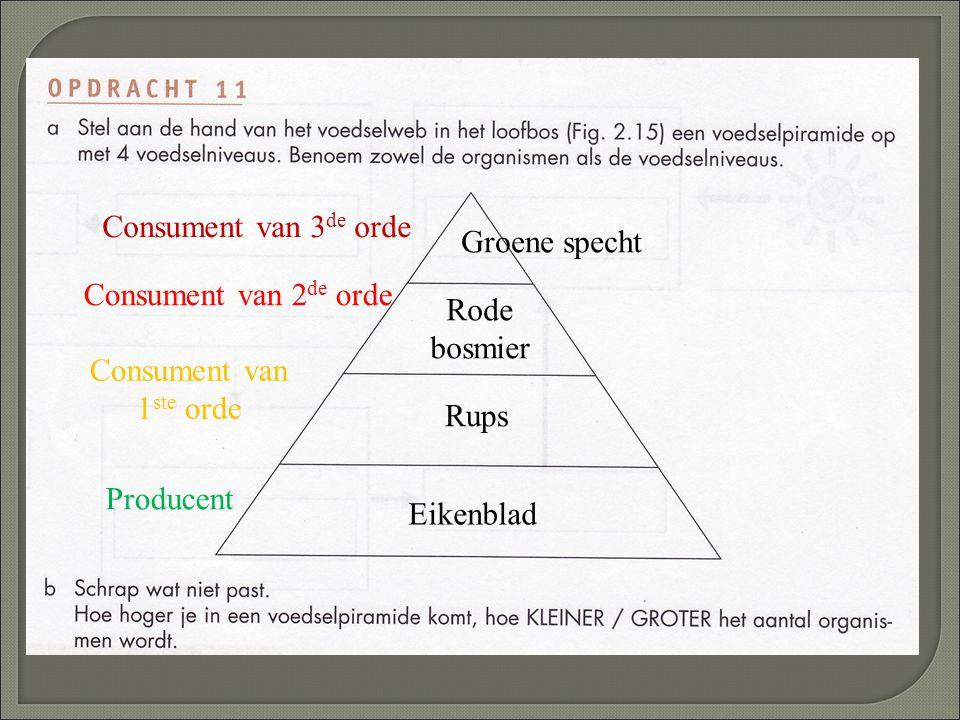 Eikenblad Rups Rode bosmier Groene specht Producent Consument van 1 ste orde Consument van 2 de orde Consument van 3 de orde
