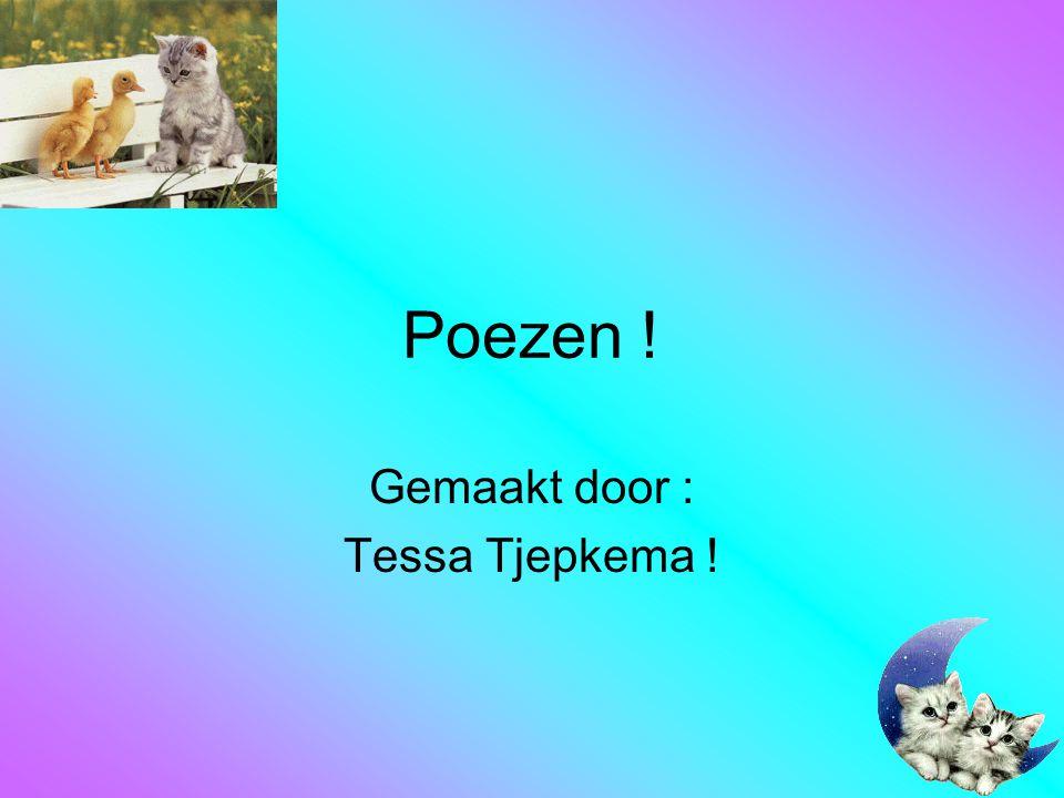Poezen ! Gemaakt door : Tessa Tjepkema !