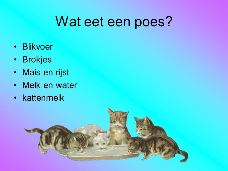 Wat eet een poes? Blikvoer Brokjes Mais en rijst Melk en water kattenmelk