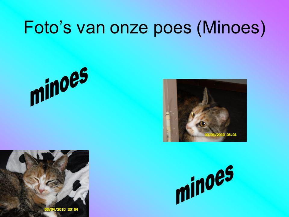 Foto's van onze poes (Minoes)