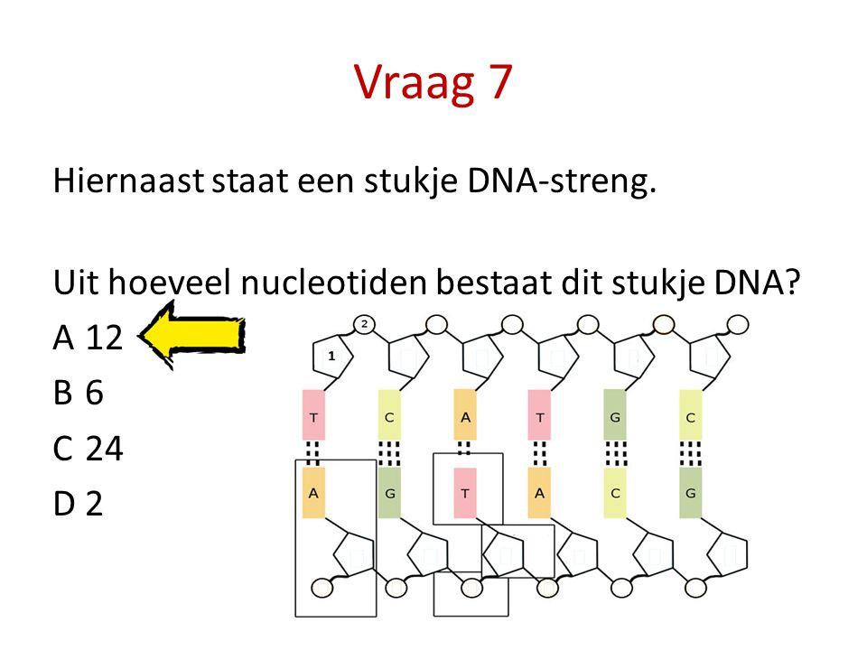 Vraag 7 Hiernaast staat een stukje DNA-streng. Uit hoeveel nucleotiden bestaat dit stukje DNA? A12 B6 C24 D2