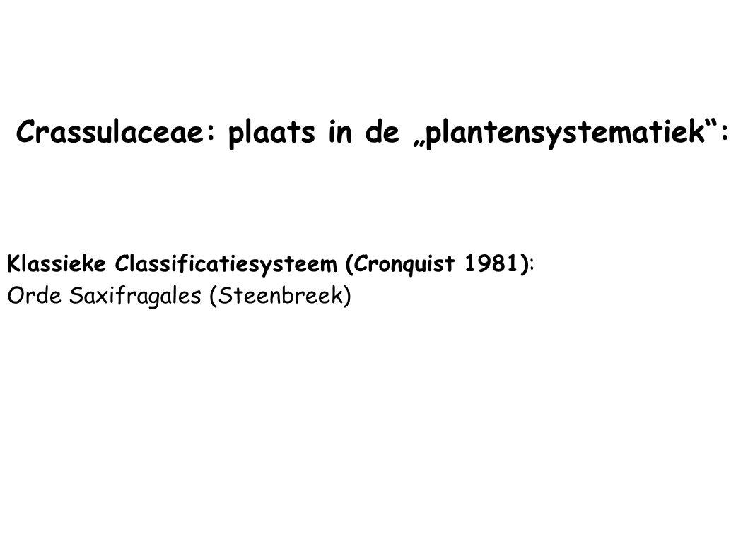 """Crassulaceae: plaats in de """"plantensystematiek"""": Klassieke Classificatiesysteem (Cronquist 1981): Orde Saxifragales (Steenbreek)"""