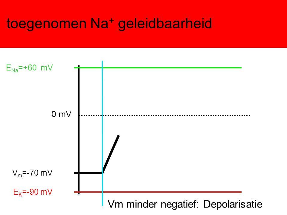 toegenomen Na + geleidbaarheid Vm minder negatief: Depolarisatie E K =-90 mV E Na =+60 mV 0 mV V m =-70 mV