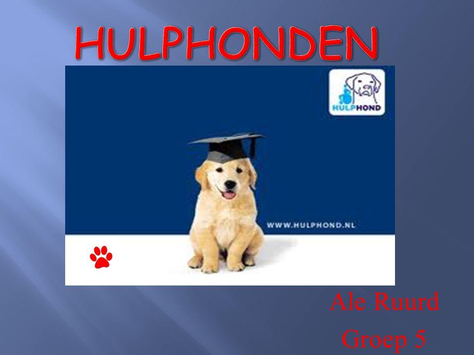Waarom heb ik dit onderwerp gekozen Wat is een hulphond Regels voor een hulphond Verschillende soorten hulphonden Mijn hulphond Prince