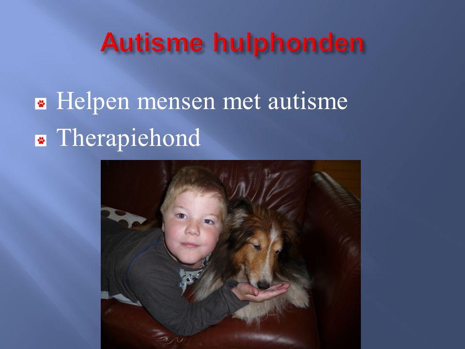 Helpen mensen met autisme Therapiehond