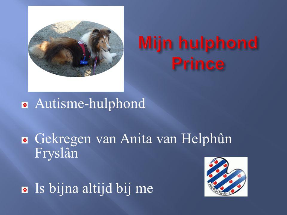 Autisme-hulphond Gekregen van Anita van Helphûn Fryslân Is bijna altijd bij me