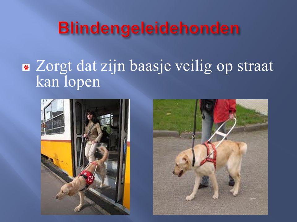 Zorgt dat zijn baasje veilig op straat kan lopen