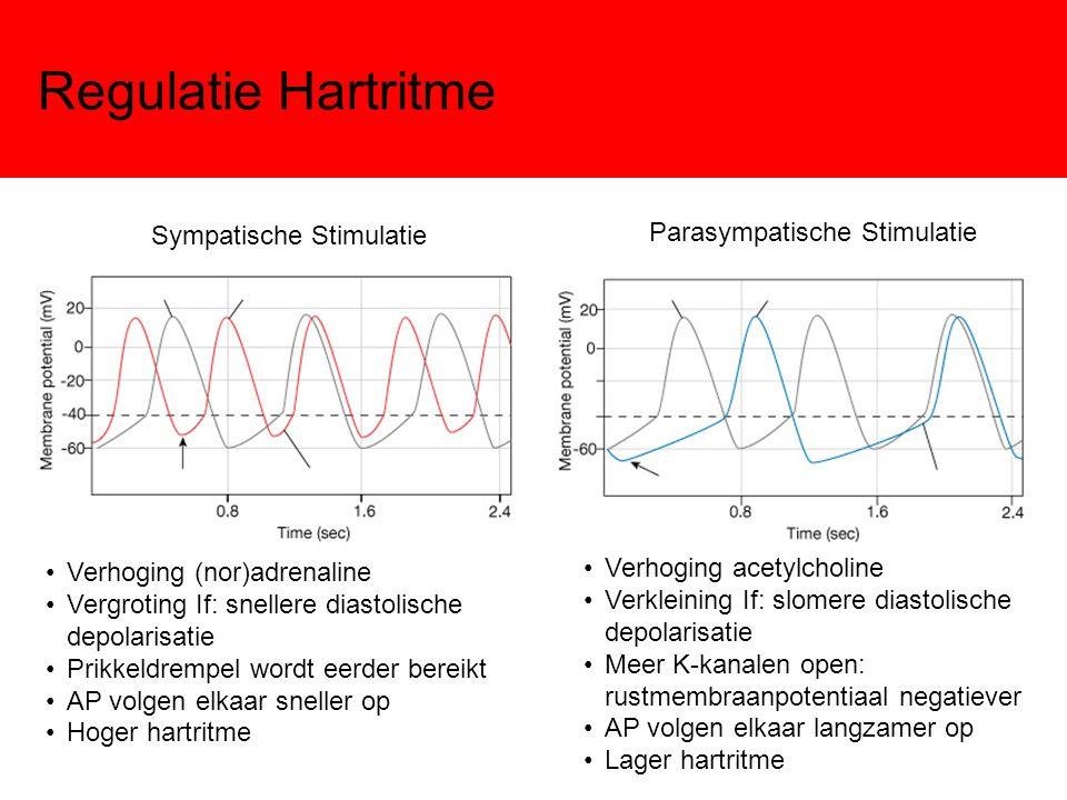 Regulatie Hartritme Sympatische Stimulatie Parasympatische Stimulatie Verhoging (nor)adrenaline Vergroting If: snellere diastolische depolarisatie Pri