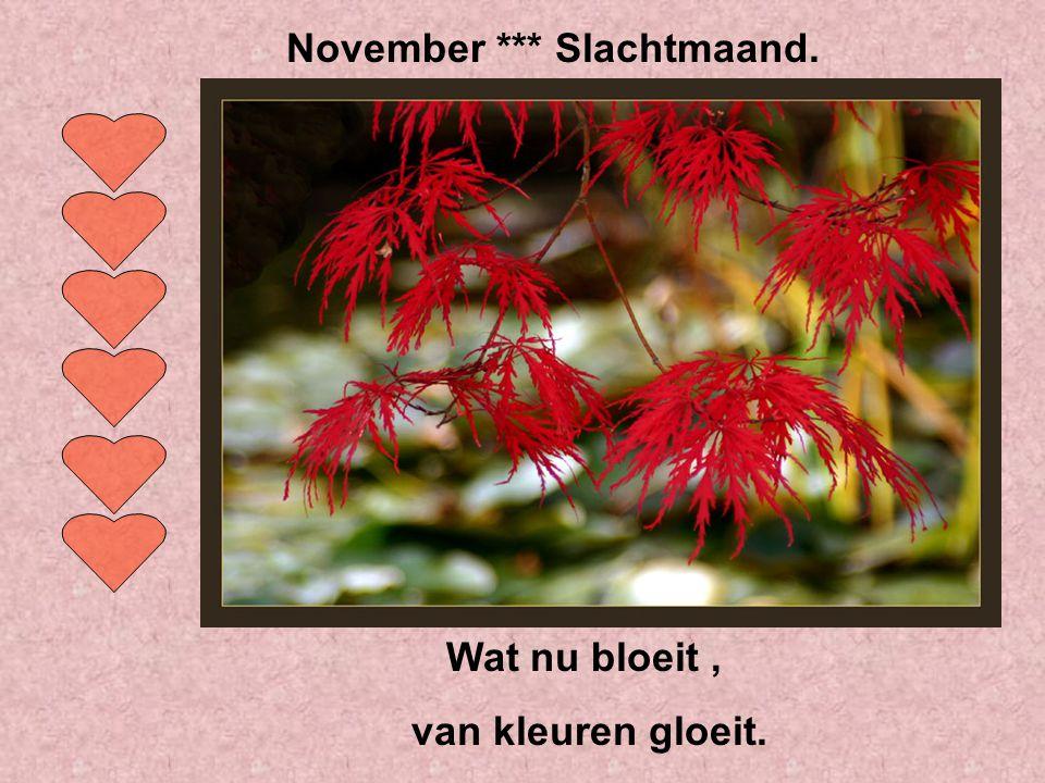 Als de ganzen nu al naar het zuiden vliegen, zal de winter er niet om liegen. Oktober *** Wijnmaand