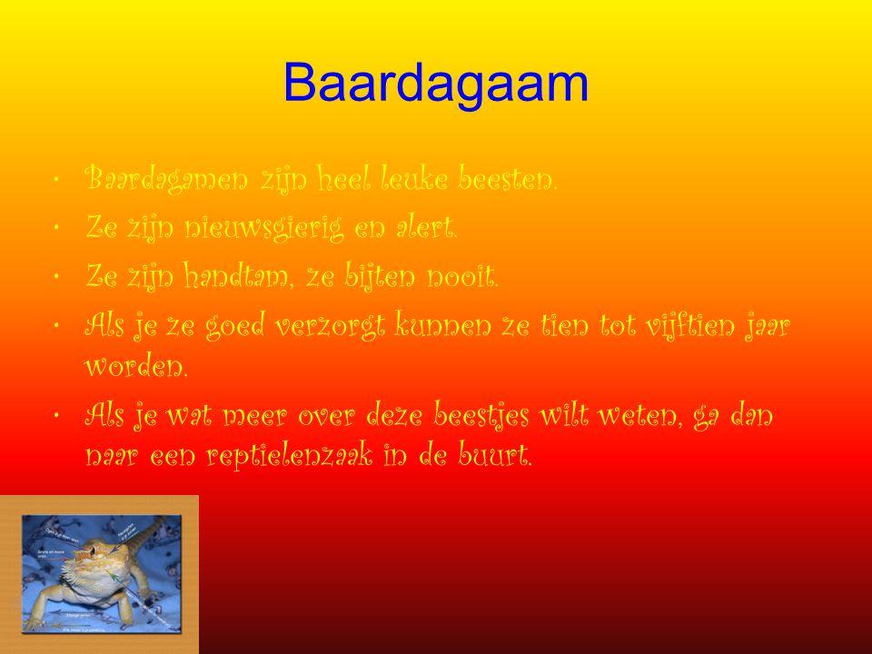 Baardagaam Baardagamen zijn heel leuke beesten. Ze zijn nieuwsgierig en alert. Ze zijn handtam, ze bijten nooit. Als je ze goed verzorgt kunnen ze tie