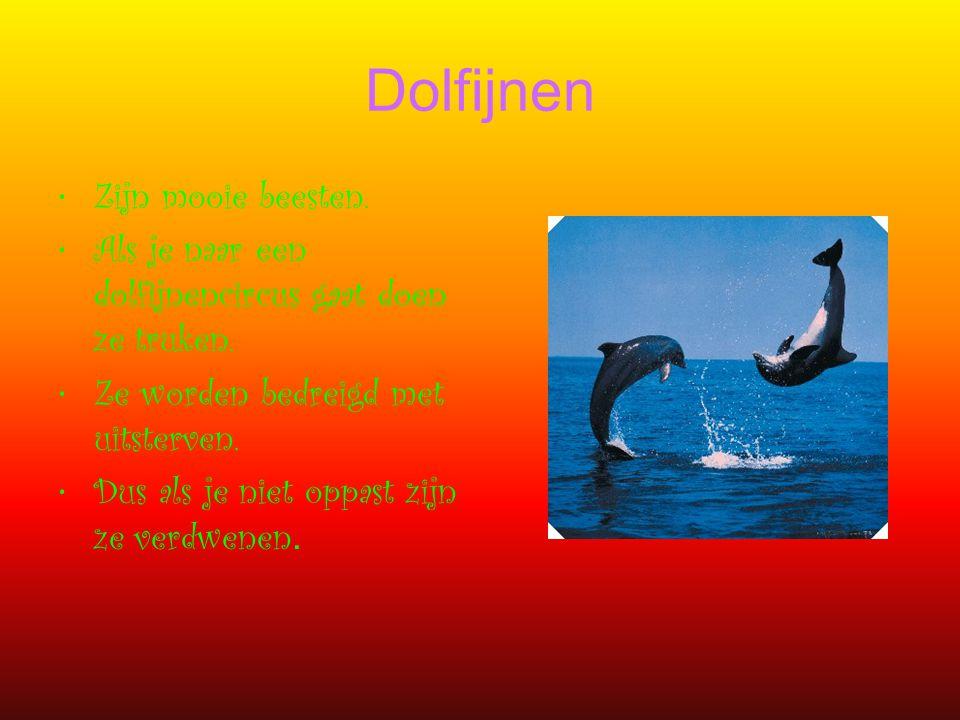 Dolfijnen Zijn mooie beesten. Als je naar een dolfijnencircus gaat doen ze truken. Ze worden bedreigd met uitsterven. Dus als je niet oppast zijn ze v