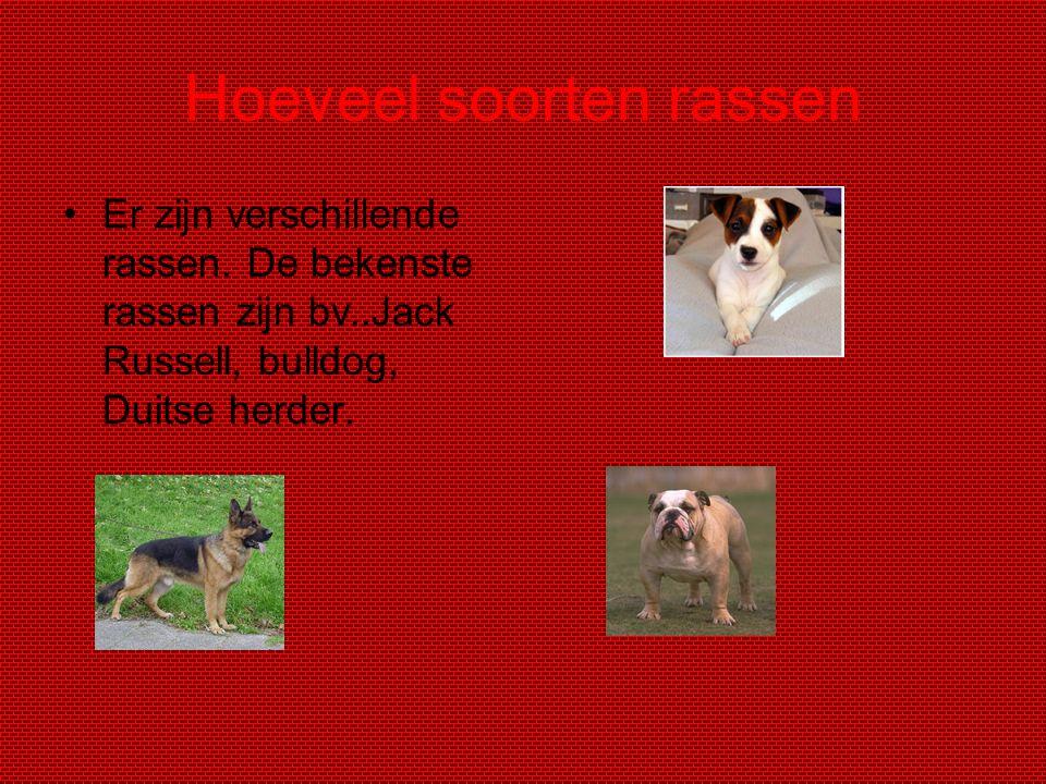 Hoeveel soorten rassen Er zijn verschillende rassen. De bekenste rassen zijn bv..Jack Russell, bulldog, Duitse herder.