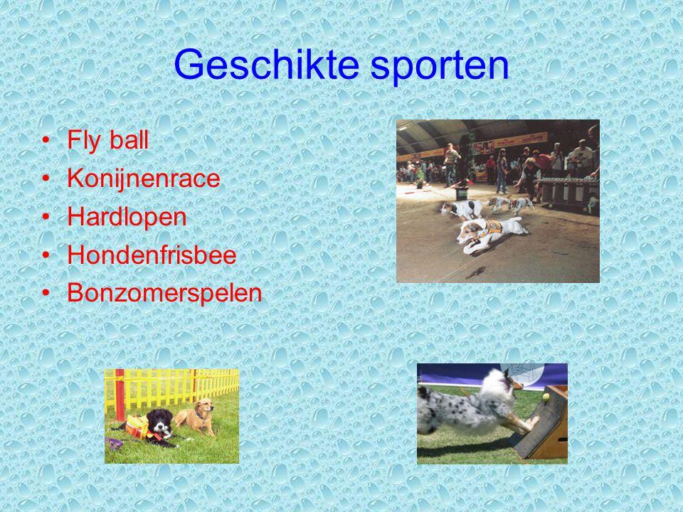 Geschikte sporten Fly ball Konijnenrace Hardlopen Hondenfrisbee Bonzomerspelen