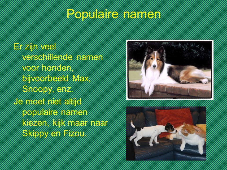 Populaire namen Er zijn veel verschillende namen voor honden, bijvoorbeeld Max, Snoopy, enz. Je moet niet altijd populaire namen kiezen, kijk maar naa