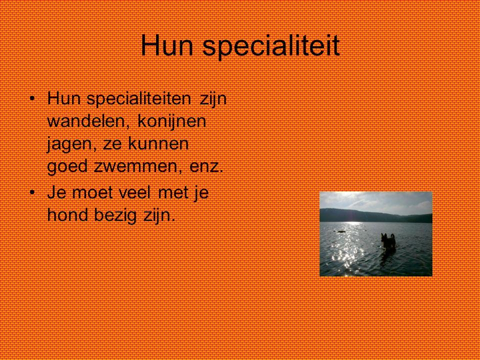 Hun specialiteit Hun specialiteiten zijn wandelen, konijnen jagen, ze kunnen goed zwemmen, enz. Je moet veel met je hond bezig zijn.