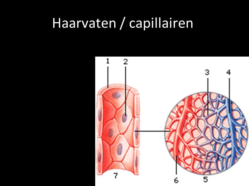 Haarvaten / capillairen