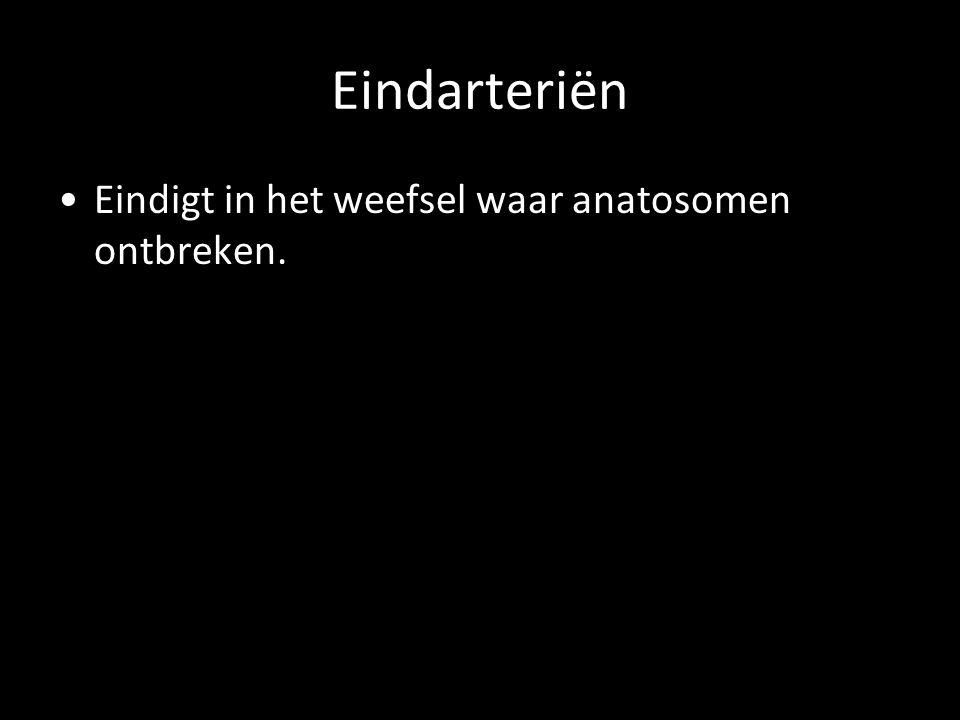 Eindarteriën Eindigt in het weefsel waar anatosomen ontbreken.