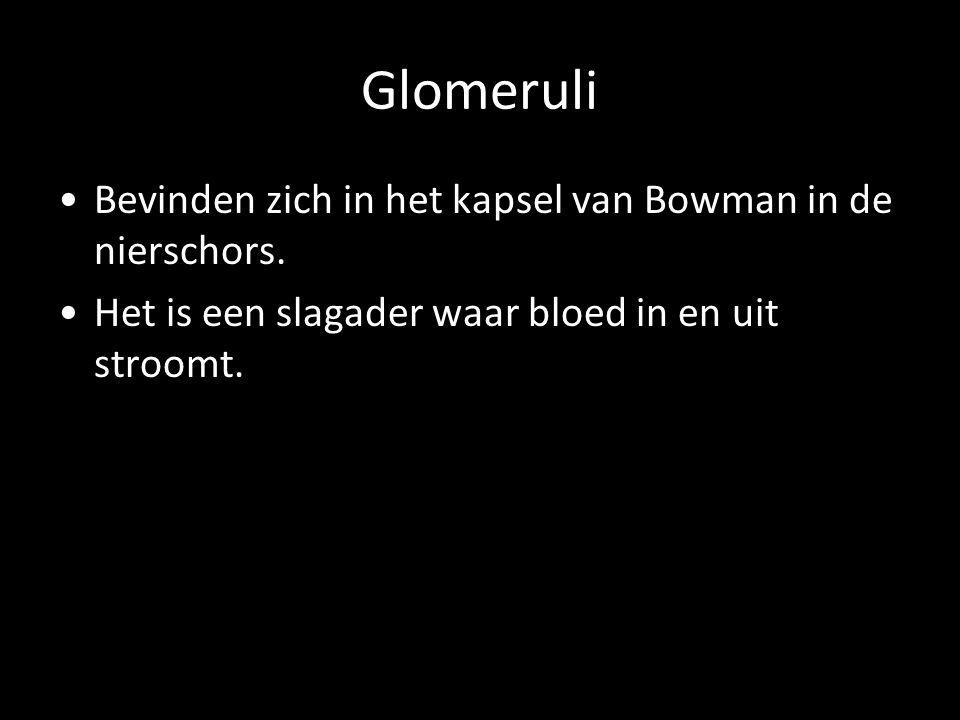 Glomeruli Bevinden zich in het kapsel van Bowman in de nierschors. Het is een slagader waar bloed in en uit stroomt.