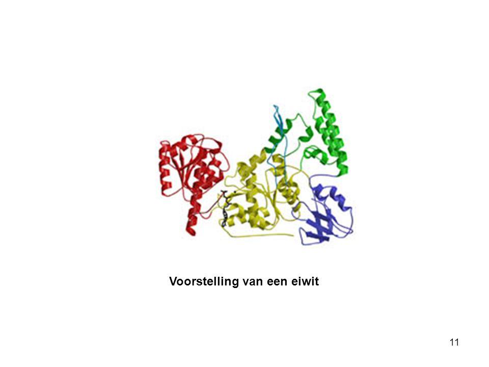 Voorstelling van een eiwit 11