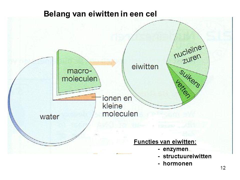 Belang van eiwitten in een cel Functies van eiwitten: - enzymen - structuureiwitten - hormonen 12