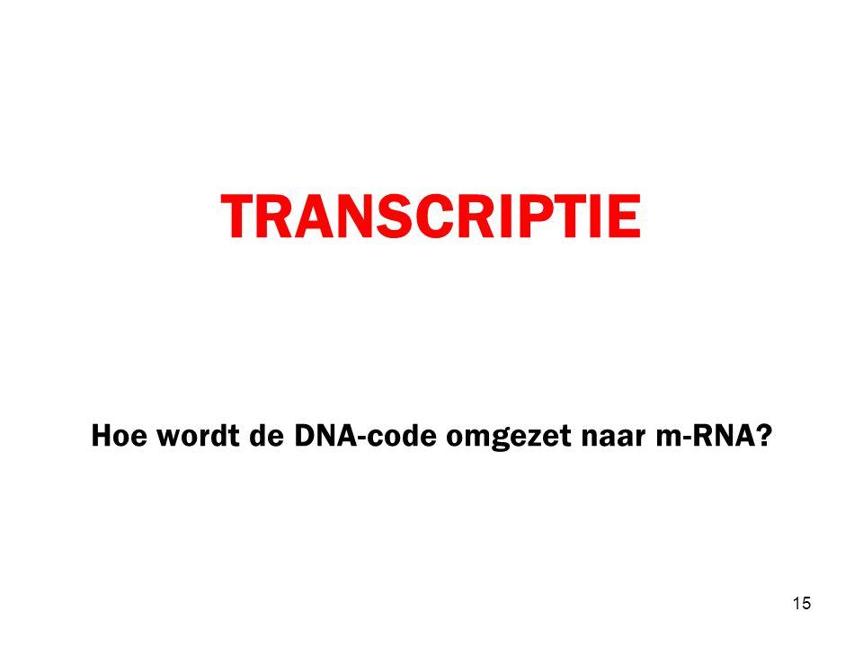 TRANSCRIPTIE Hoe wordt de DNA-code omgezet naar m-RNA? 15